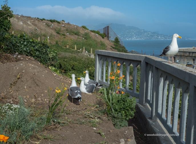 Alcatraz (1 of 1)-6