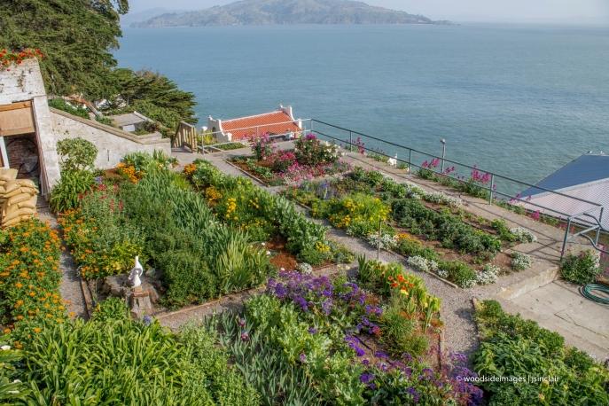 Alcatraz40