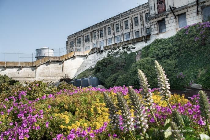 Alcatraz47