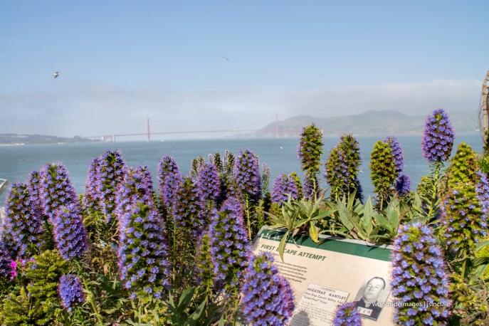 Alcatraz49